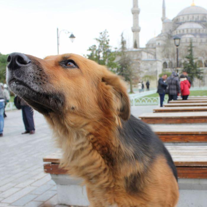 Istanbul. Turkey 11