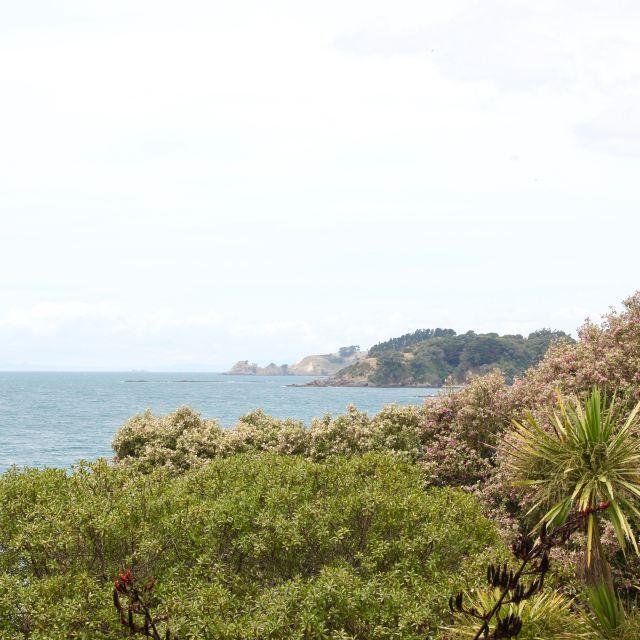 Waiheke, New Zealand 10