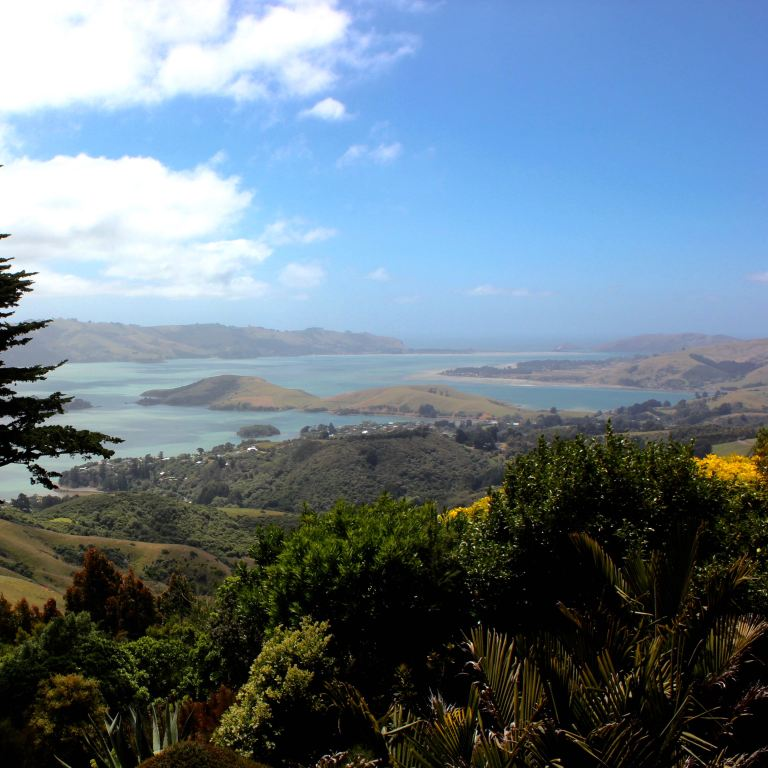 Dunedin, New Zealand 19