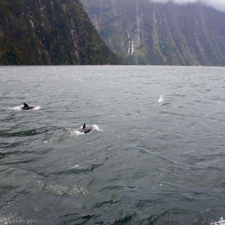 Milford Sound, New Zealand 15