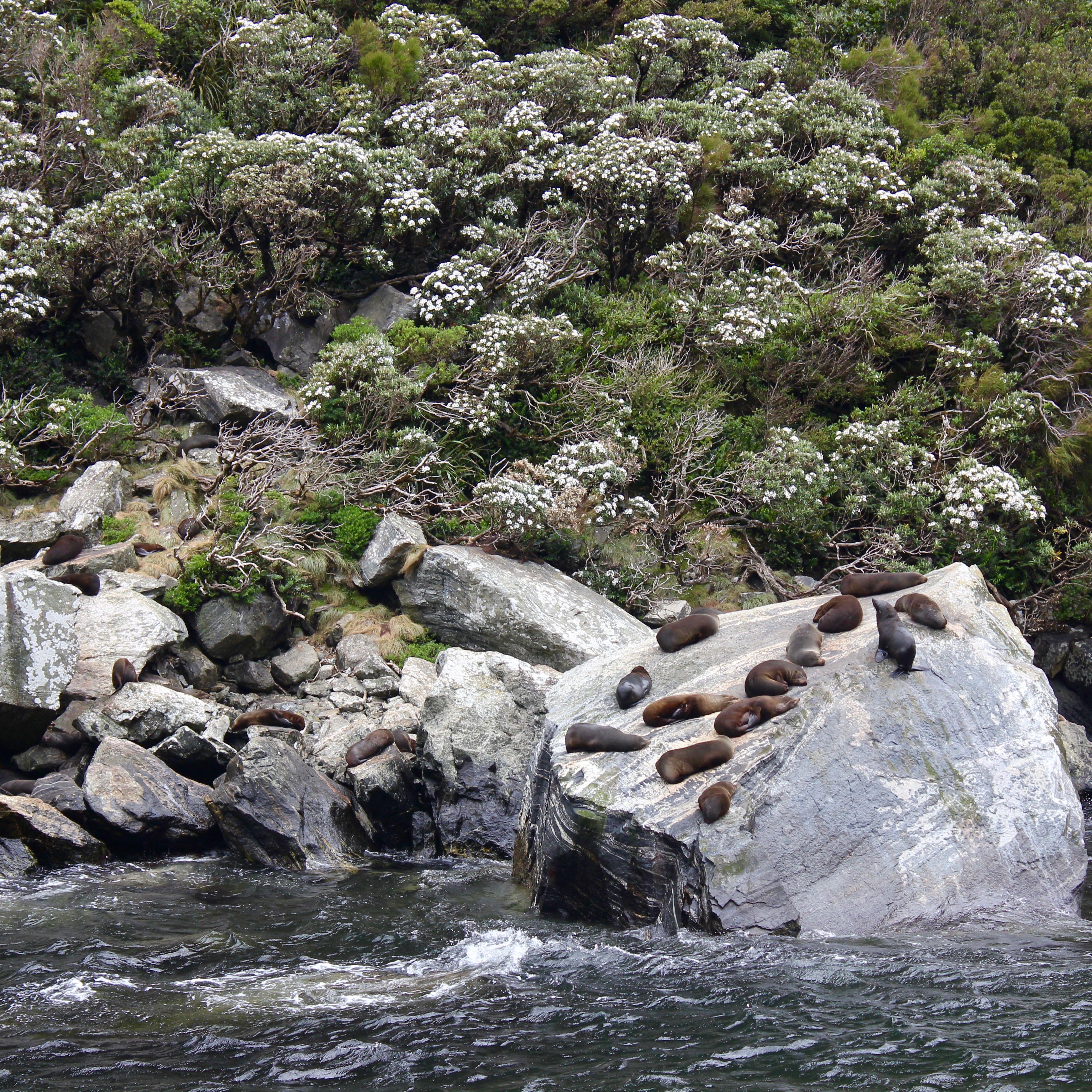 Milford Sound, New Zealand 18