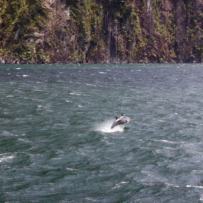 Milford Sound, New Zealand 19