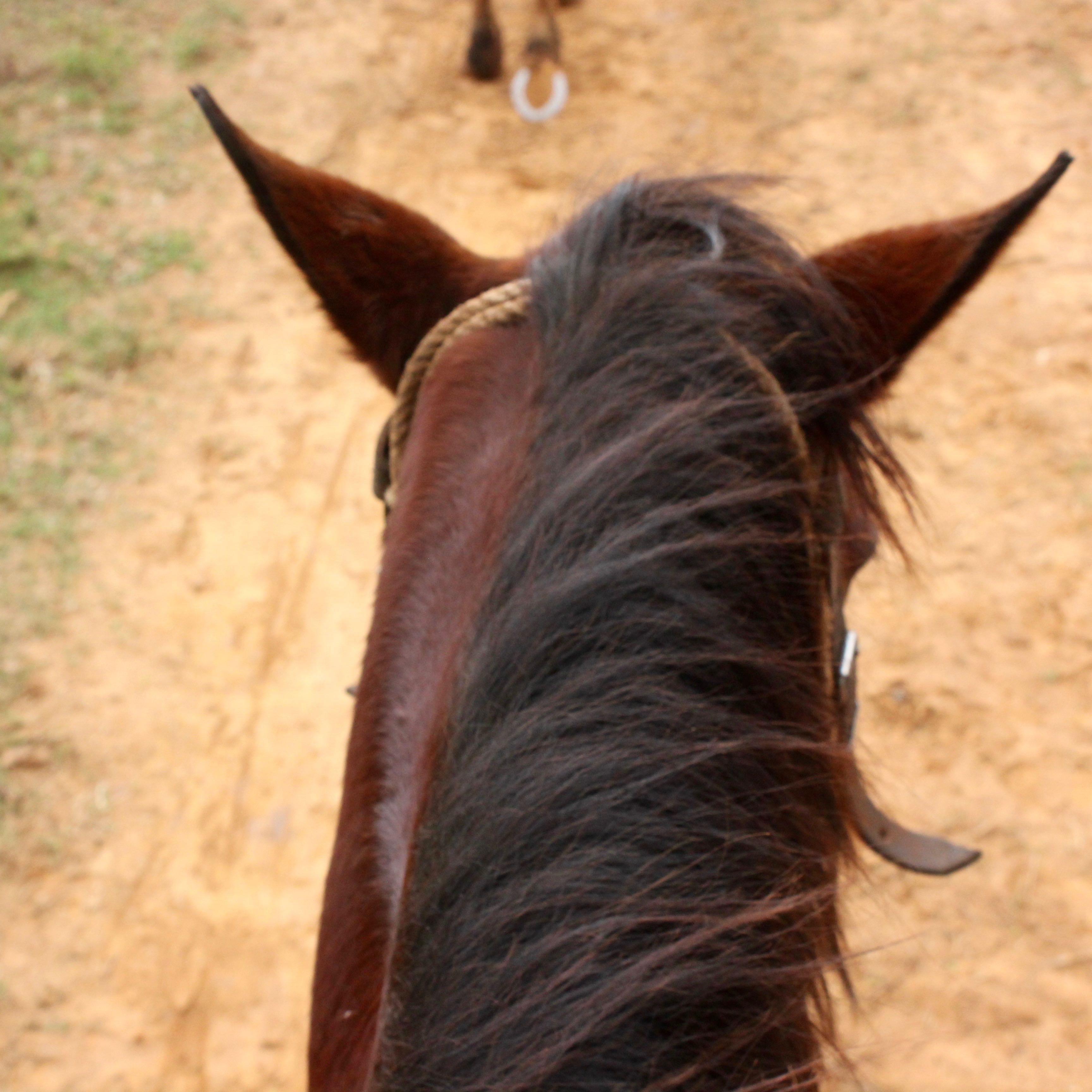 vinales, Cuba horse