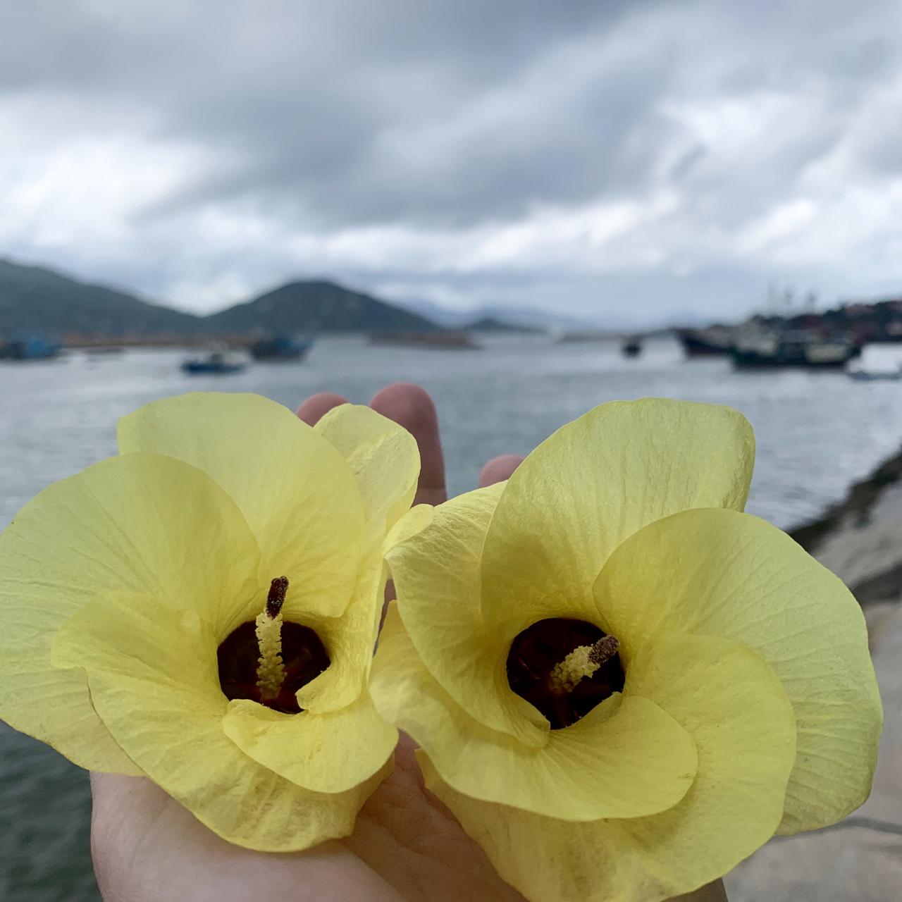 Cheung Chau, Hong Kong - 1 (1)